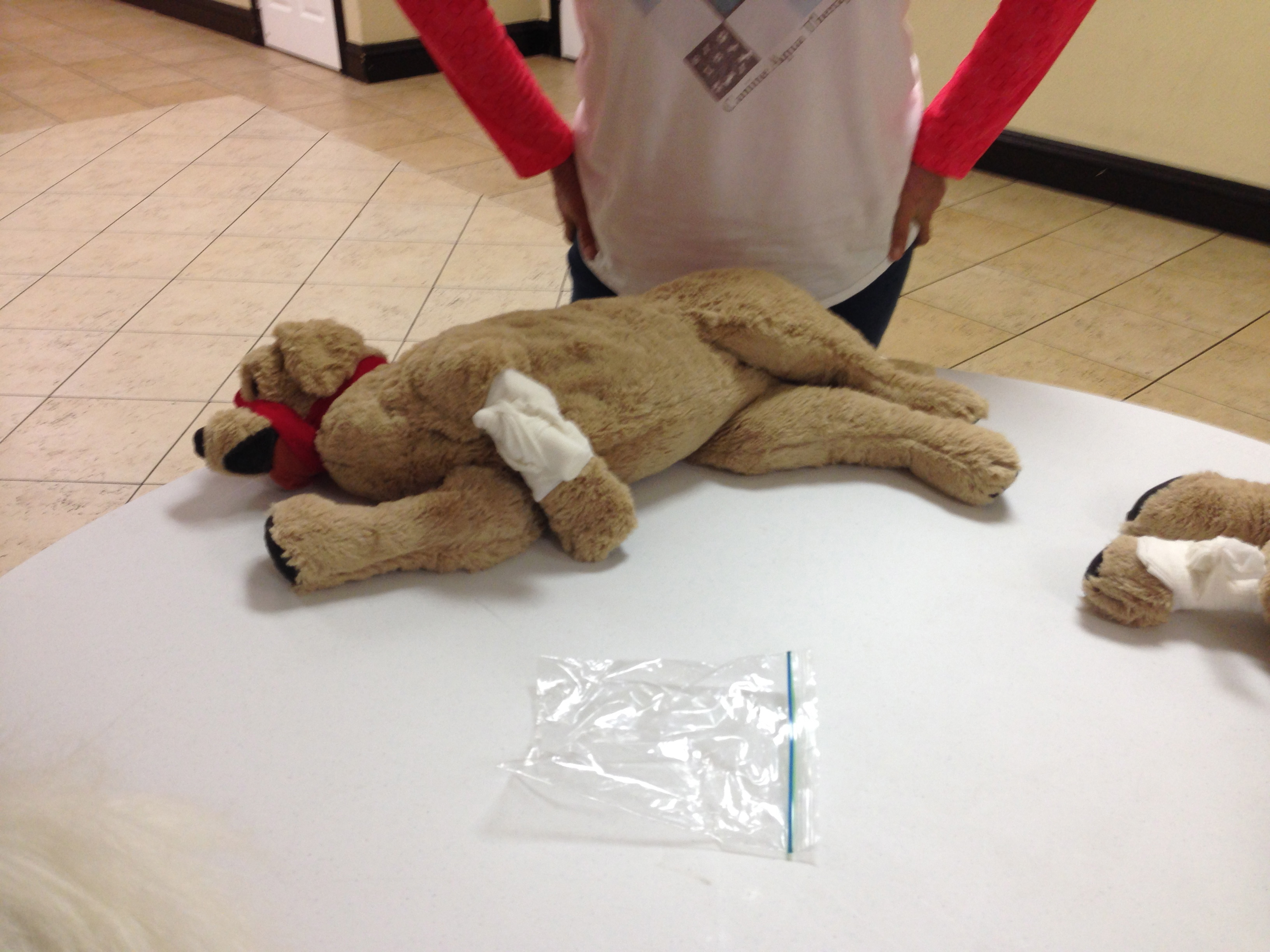 Pet Cpr First Aid Smspalmbeachs Blog